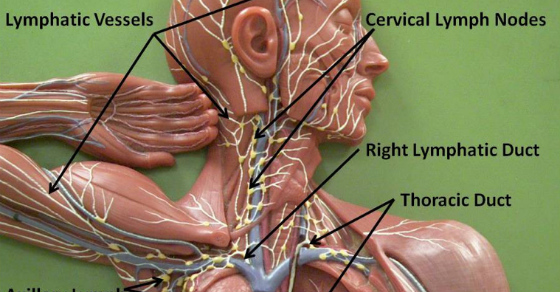 How to clean your lymphatic system naturally